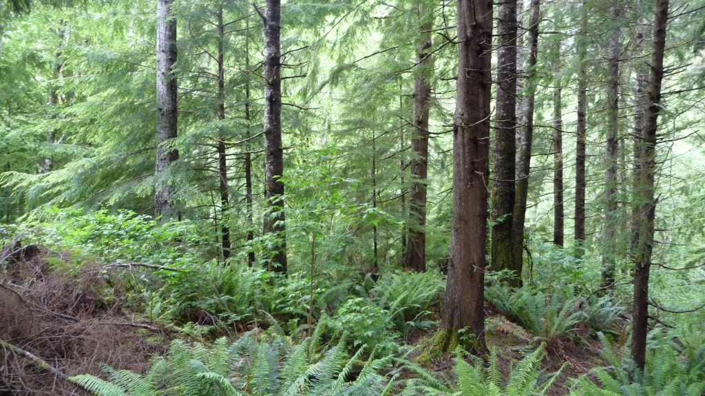 000 NPS Forest 10119 03