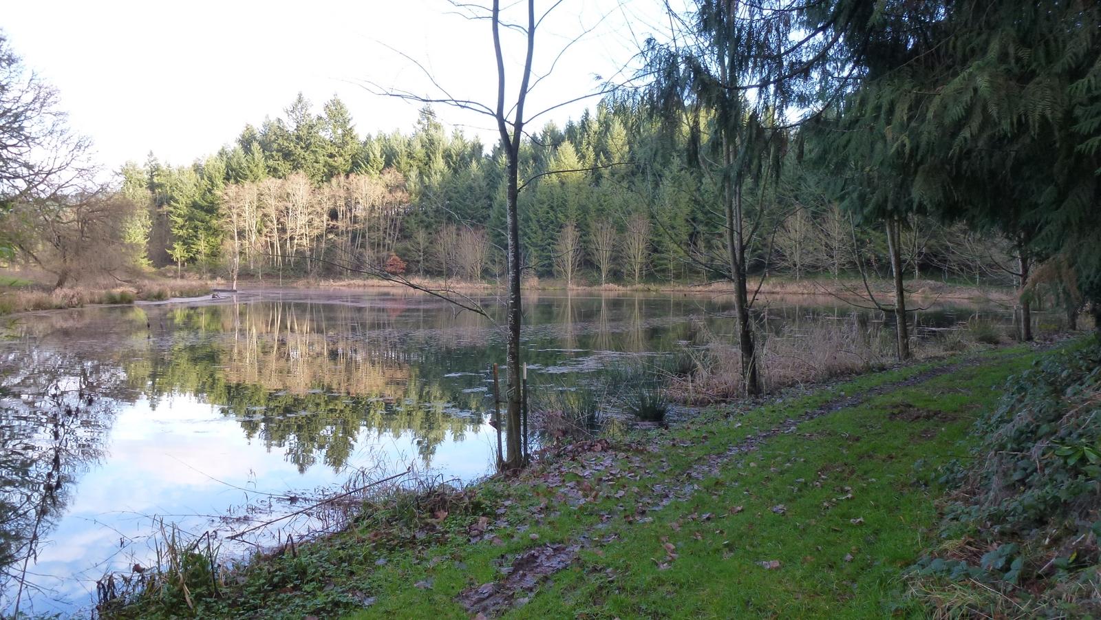003  Wetland Wmt Valley HallFarm 12140
